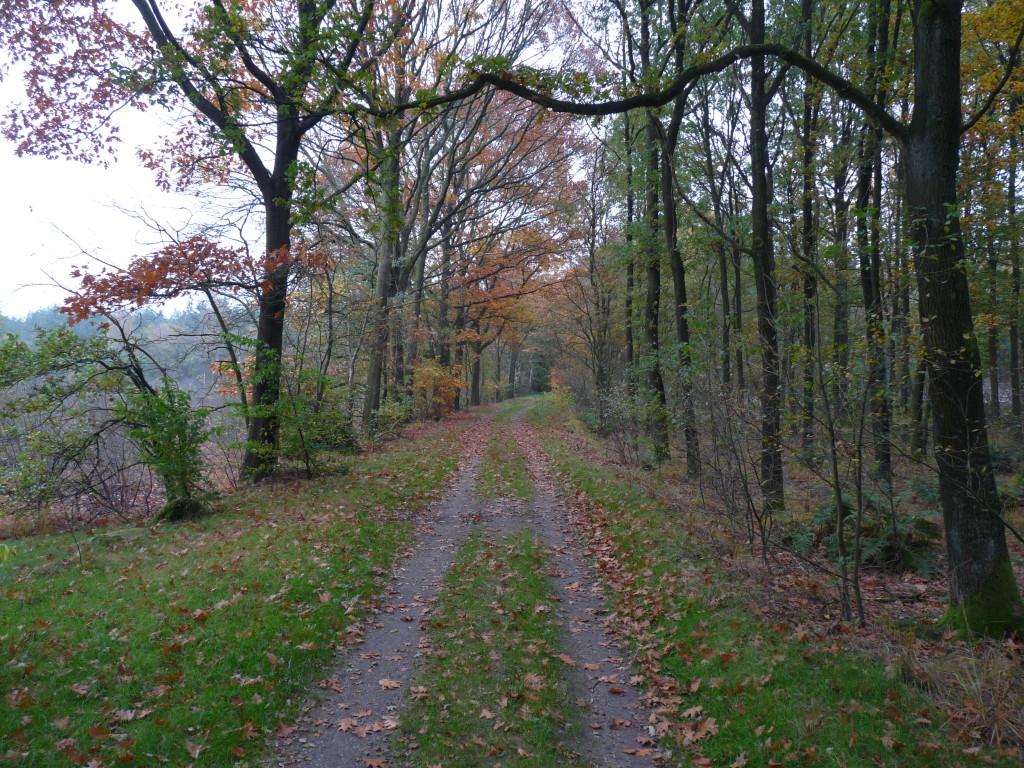 Spuren auf dem Weg zwischen Westerbork und Hooghalen